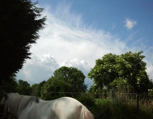 Ochtend bij de paarden