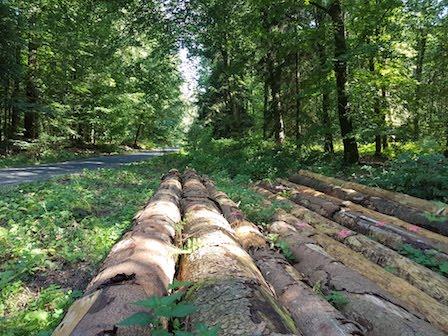 Middenin het Reichswald