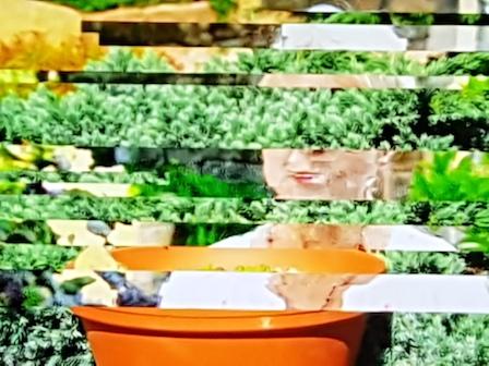 Storing tijdens Gardener's World